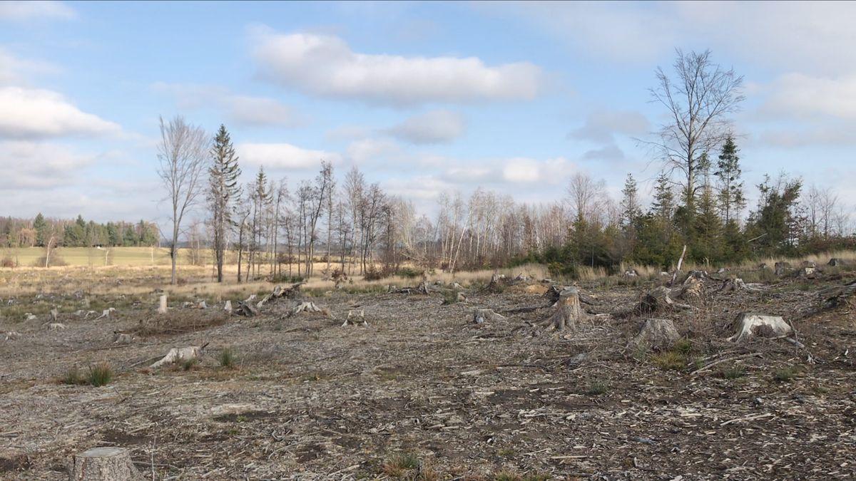 Pět let po kůrovci: Tady je návod, jak se sbroukem ničícím lesy vypořádat