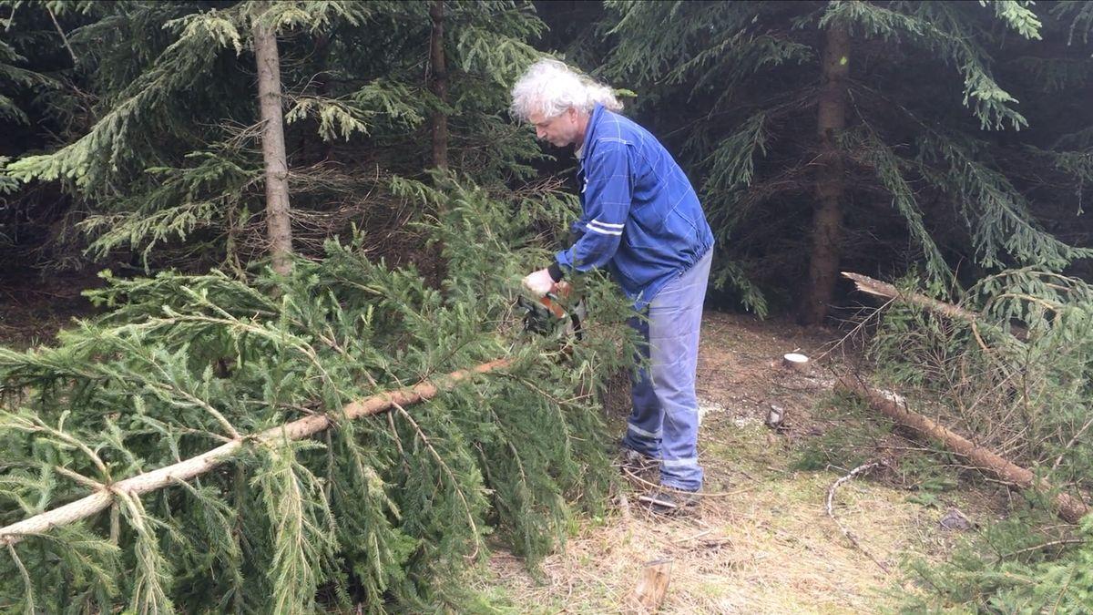 Odvezte poškozené dřevo za symbolickou cenu, zpomalíte kůrovce, vyzývají Krkonoše