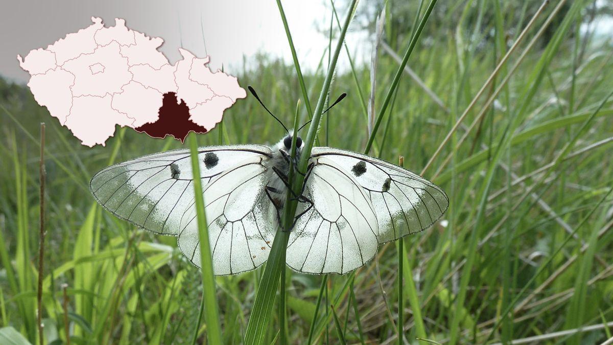 Voboře pod Pálavou prosvětlili lesy, přibylo tam vzácných motýlů