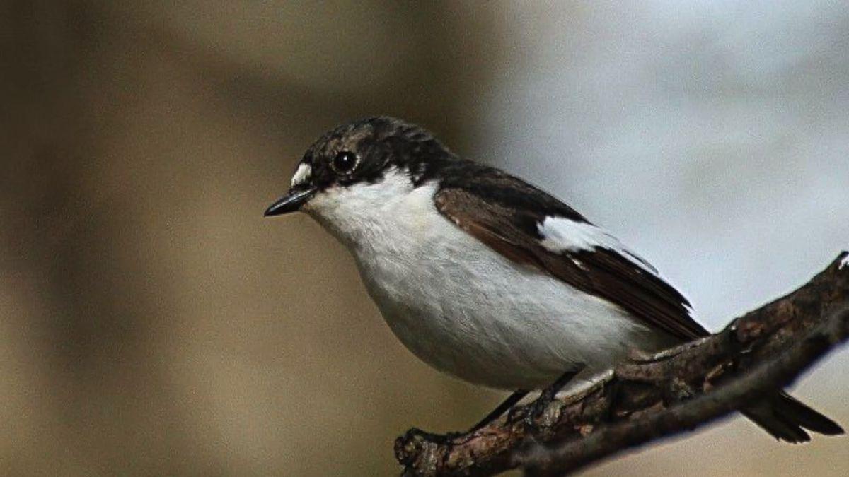 VPřerově začala přestavba ornitologické stanice