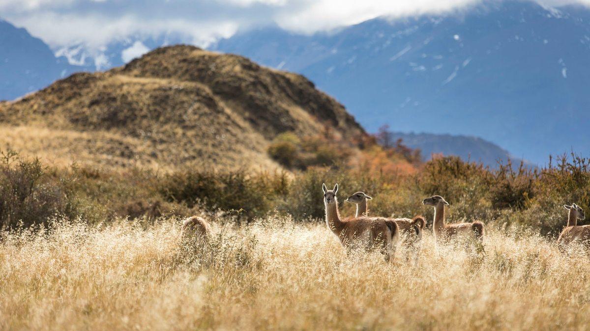 Tři tisíce kilometrů a 17parků. Chile propojilo své přírodní rezervace unikátní trasou