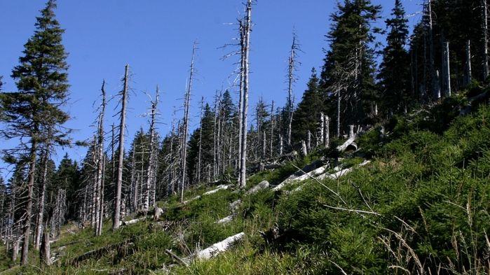 Na kůrovcovou kalamitu Pardubický kraj vyčlení 3,2milionu korun