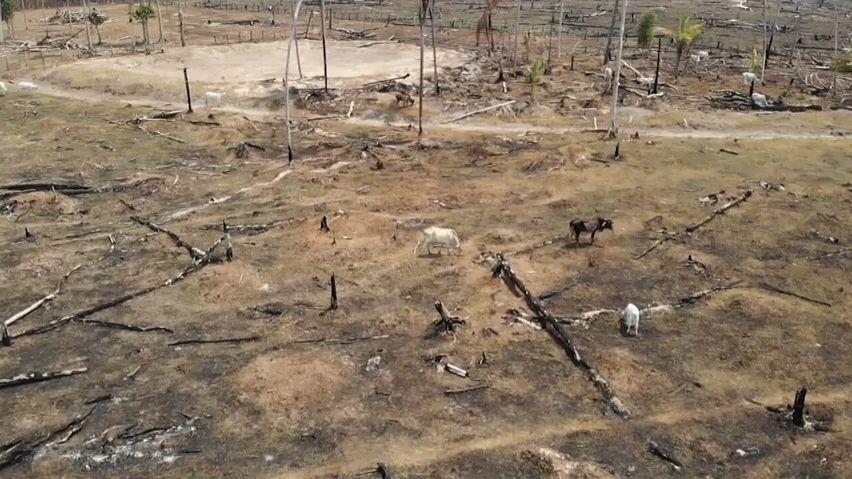 Požáry vAmazonii jsou uměle vyvolané. Farmářům se to díky dotacím vyplácí, tvrdí český biolog