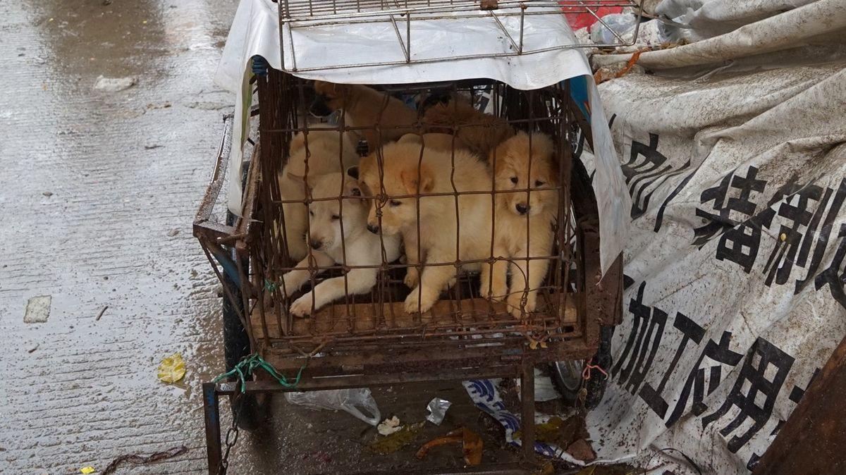 Pes je přítel, ne jídlo. Koronavirus a mladí Číňané narušují tradice