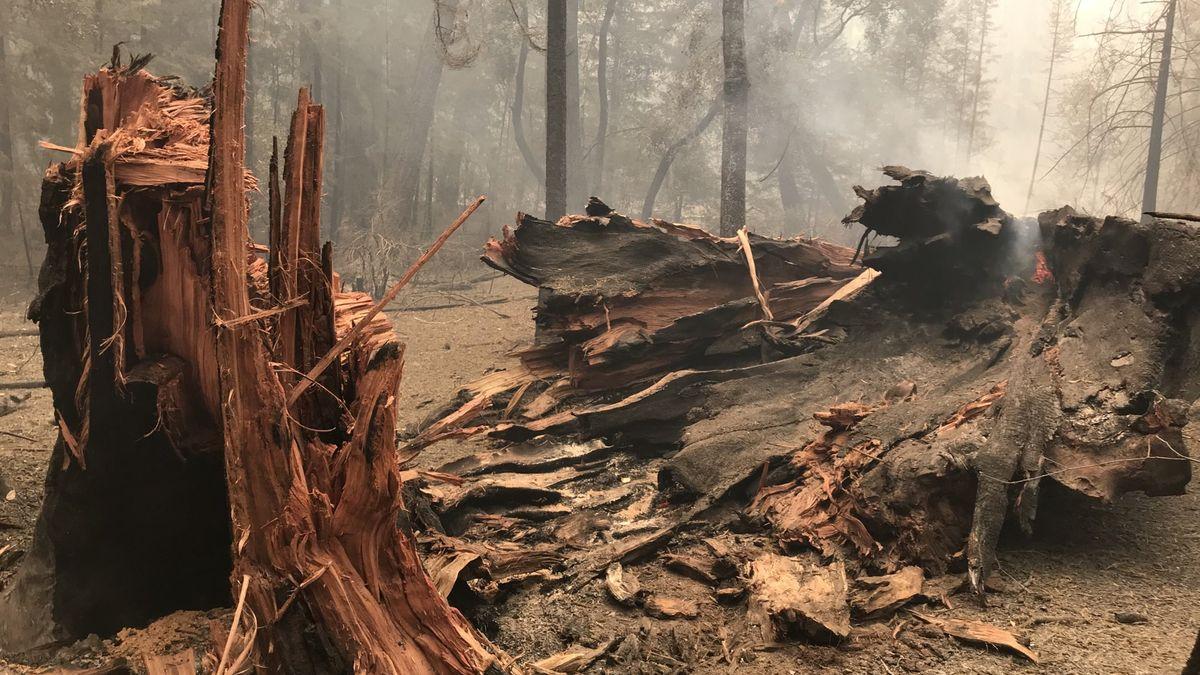 Unikátní snímky: Kalifornské sekvoje přežily ničivý požár