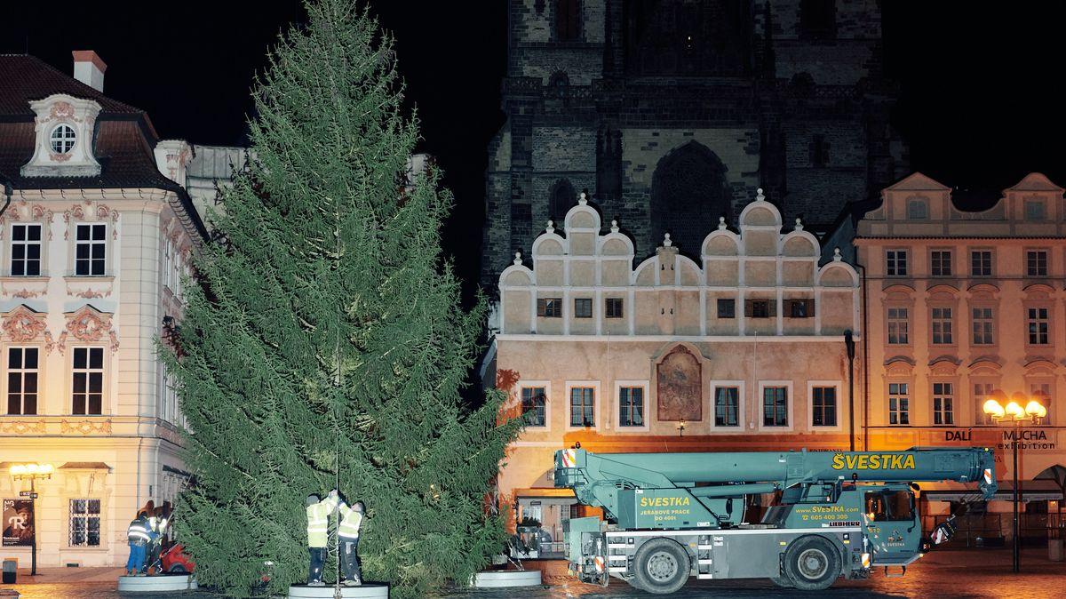 Fotky: Na Staroměstské náměstí vnoci dorazil vánoční strom