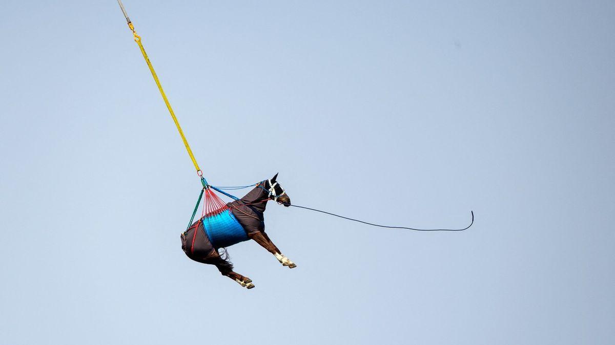 Fotky: Aletí! Ve Švýcarsku testovali transport koní vrtulníkem