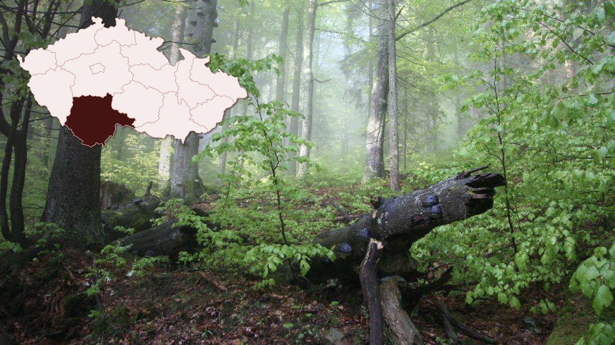 VBoubínském pralese rozšíří plochy, které zůstanou bez vlivu člověka