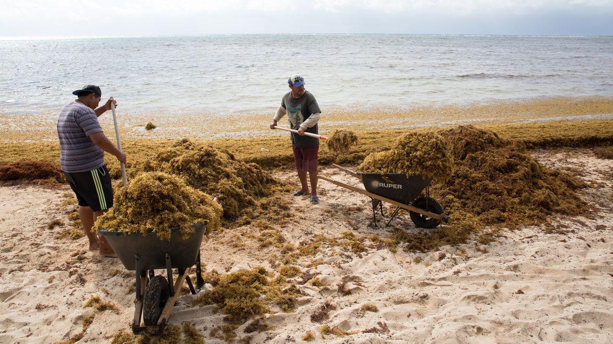 Fotky: Atlantik kvete a není to dobře. Lepkavé hnědé řasy zamořují pobřeží