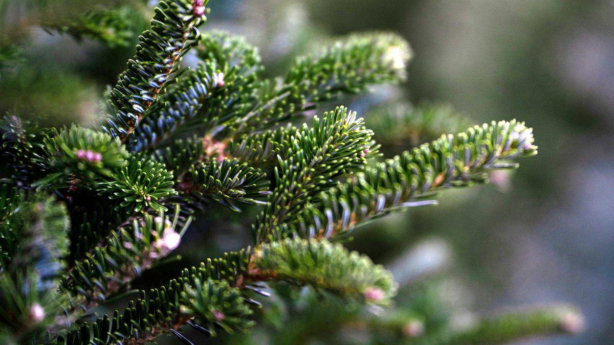 Vánoční stromek nepatří do popelnice ani lesa. Někdy je třeba ho nařezat