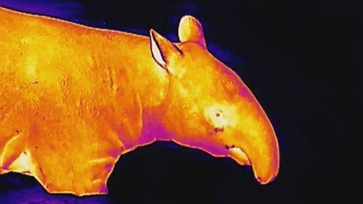 Tajný život zvířat: 10snímků zpražské zoo, když padne tma
