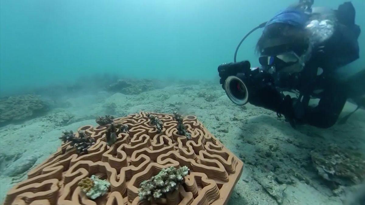 Do záchrany korálů se pouští i3D tisk. Vyrábí květináče na dna moří