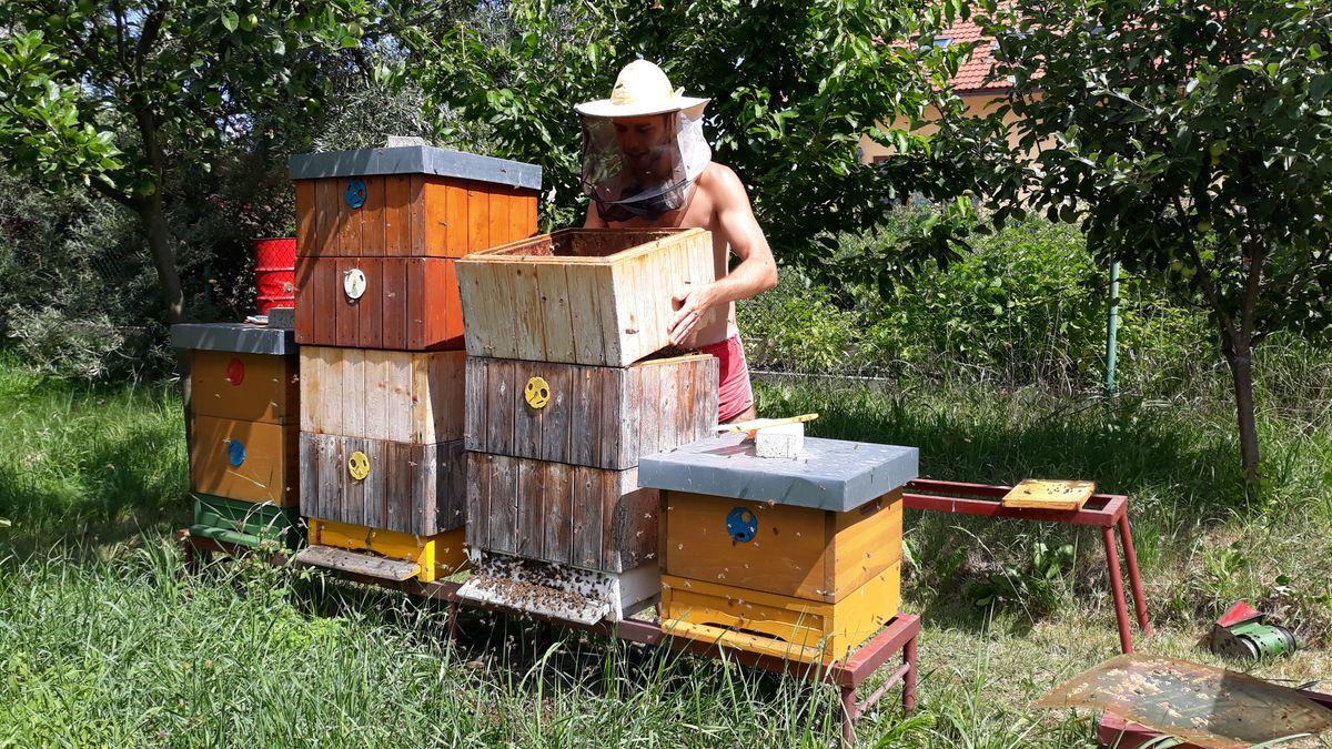 Karlovarský kraj letos rozdělí včelařům 1,3milionu korun
