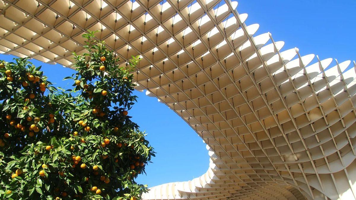 Spadané pomeranče se znovu využijí. Sevilla znich vyrobí elektřinu