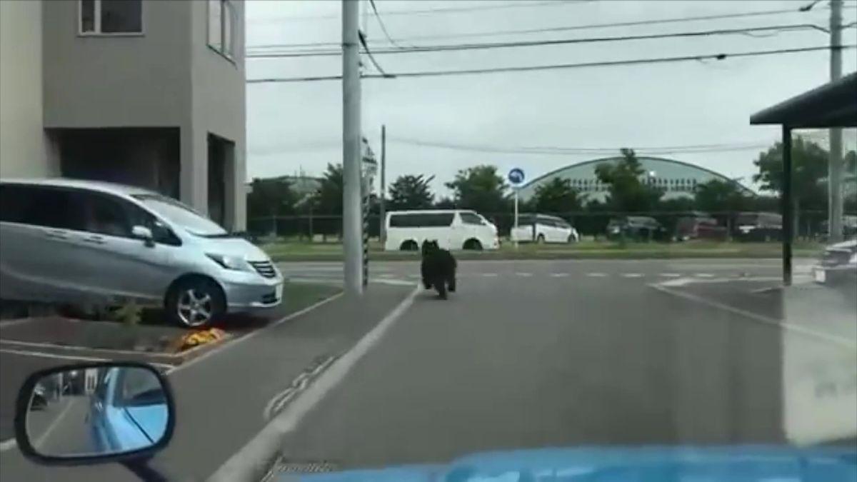 Vjaponském Sapporu se medvěd dostal až do kasáren. Lovci ho zastřelili
