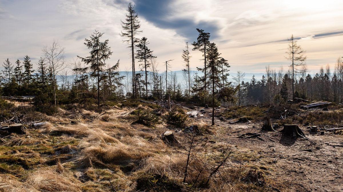 Lesy emise vždy víc pohlcují, než vypouštějí. Mrtvé stromy neškodí, říká vědec