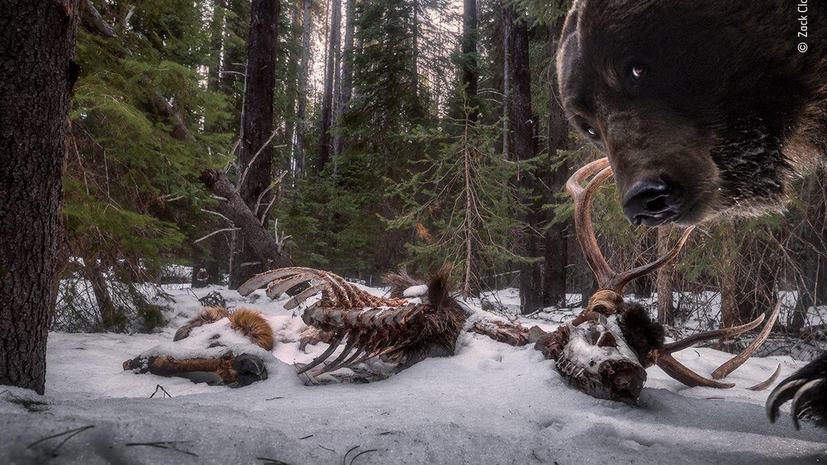 Soutěž onejlepší snímky divoké přírody zná své vítěze. Podívejte se