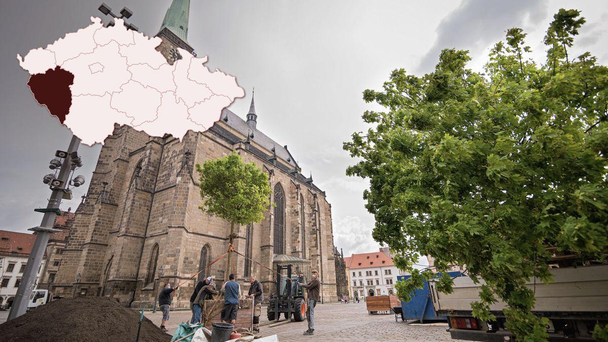 Lidem chybí stín. Plzeň začínají proti horku a suchu bránit vzrostlé stromy