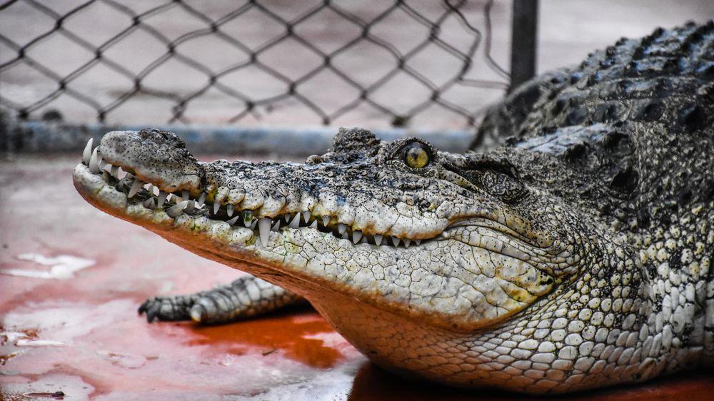 Krokodýlí zoo a vinařství, co uspělo hned dvakrát. Podívejte se, komu stát pomohl