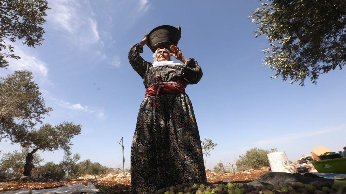 Izraelští osadníci ničí palestinským farmářům olivovníky, upozorňuje OSN