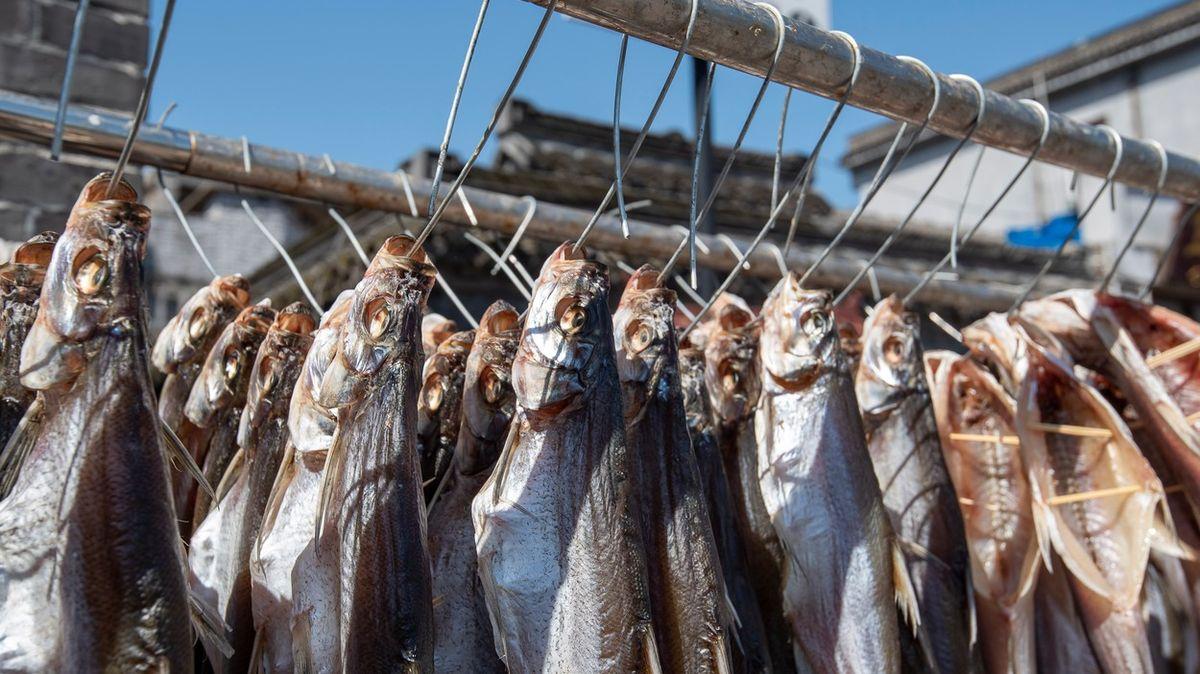Nejezte ryby, nabádá dokument celý svět. Čeští vědci řekli svůj názor