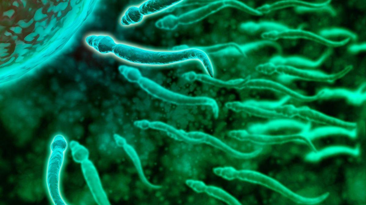 Izraelci analyzovali miliardy spermií, aby vyvrátili rozšířený hoax