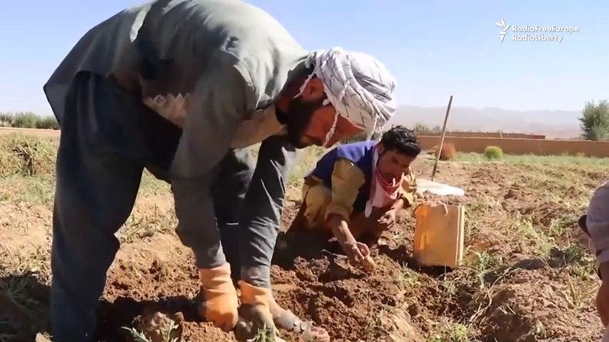 Potřebujeme pomoc, jinak nepřežijeme, prosí kvůli suchu afghánští zemědělci