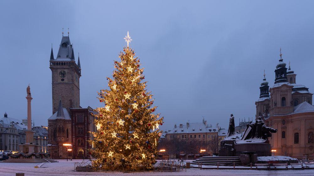 Firma začala hledat letošní vánoční strom pro Staroměstské náměstí