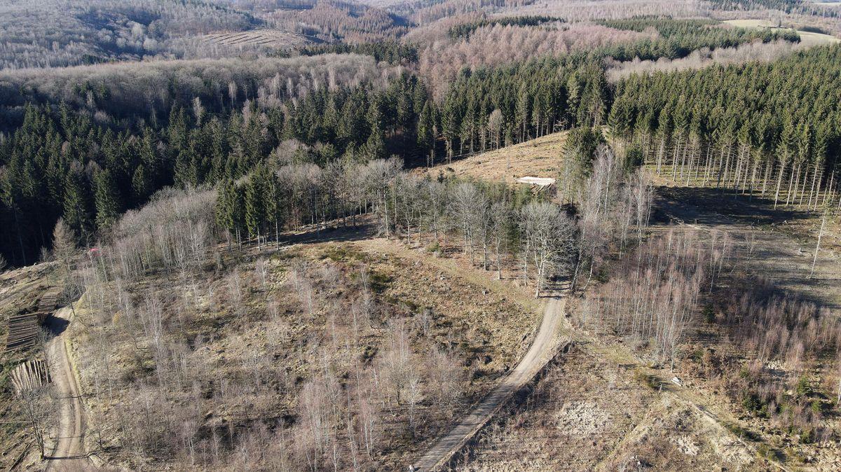 Fotky: Německé lesy rozežírá kůrovec. Loni uhynulo více stromů než kdy dříve