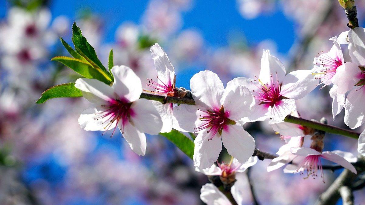 Vcentru Ostravy se otevřela Farská zahrada, její proměna stála 12milionů