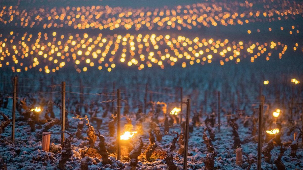 Fotky: Pozor, mrzne víno! Na francouzských vinicích hoří svíce ibalíky slámy