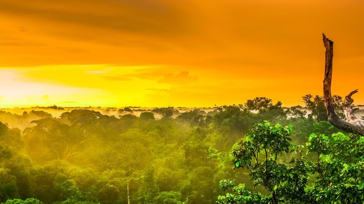 Asteroid, který vyhubil dinosaury, proměnil podobu pralesů