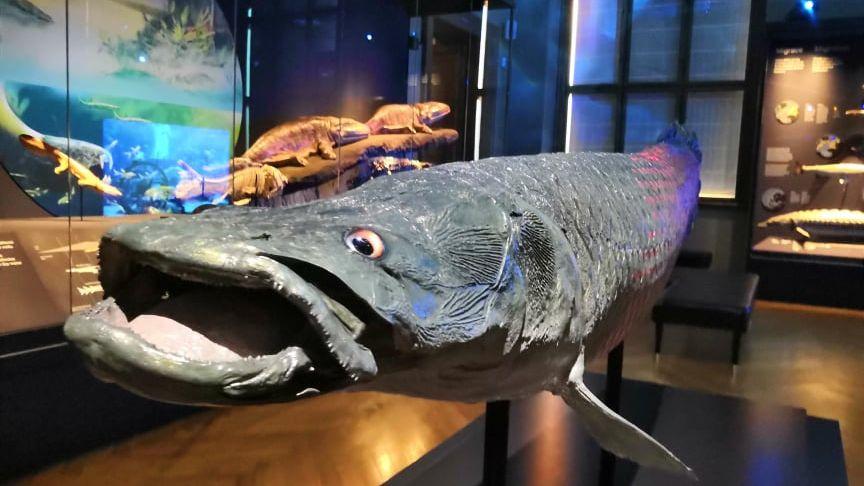 Bez polic a regálů. Zázraky evoluce ovládly Národní muzeum
