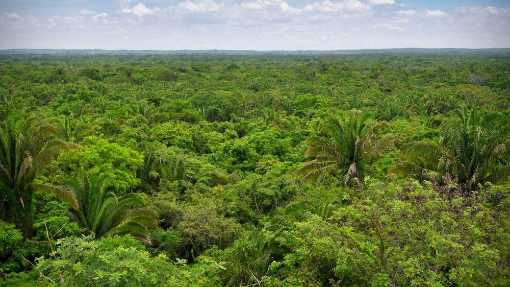 Stromy mohou přestat pomáhat. Při vysoké teplotě oteplování zhorší