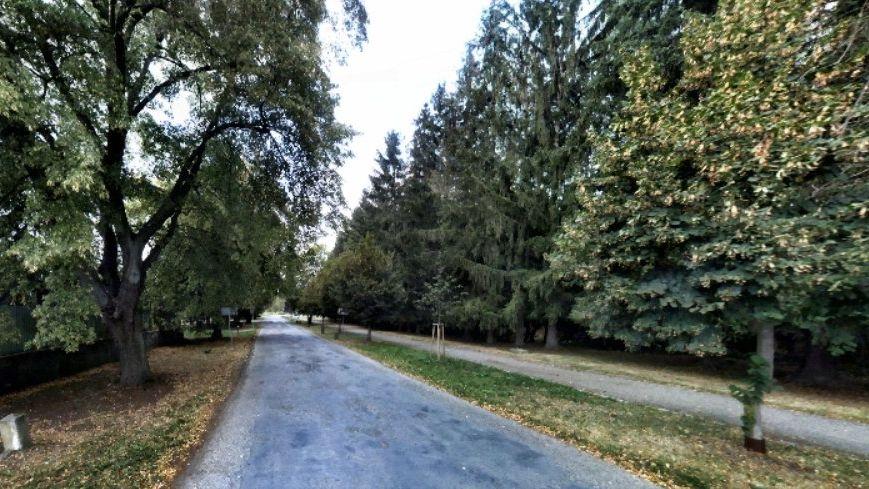 Kvůli kácení stromů ve Slavonicích bude na podzim referendum