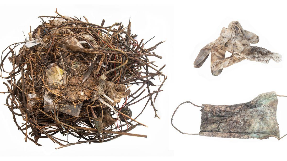Ptačí hnízdo zroušek. Fotky dokládají, jak pandemický odpad ničí přírodu