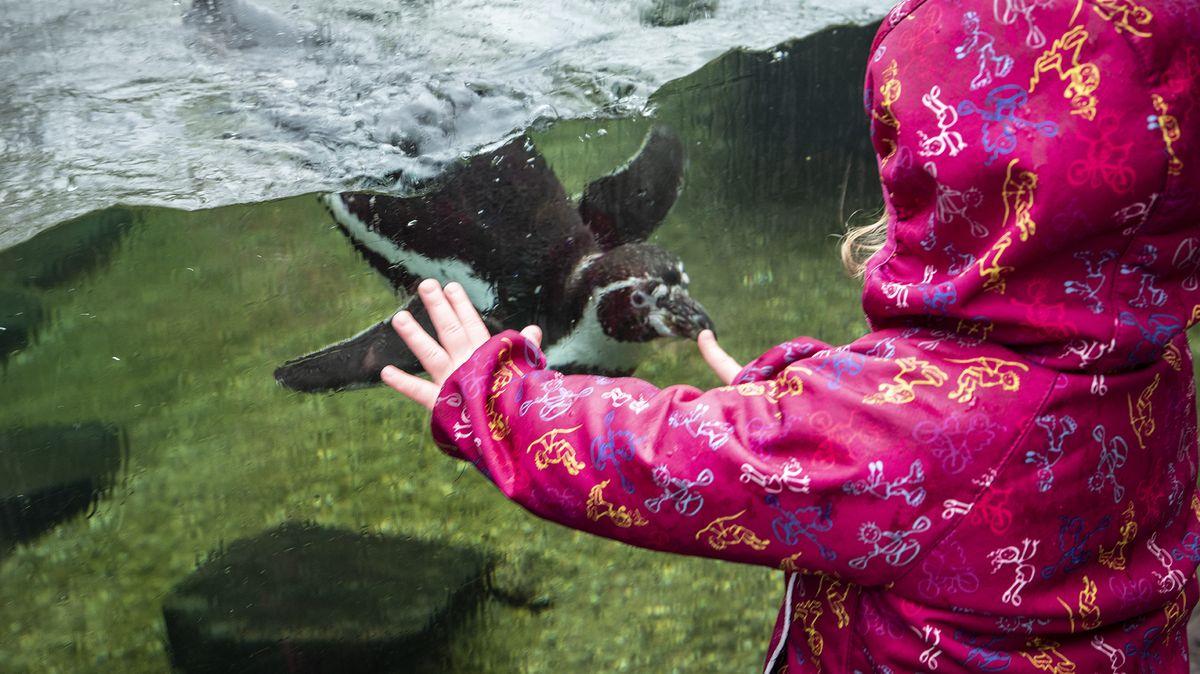 Obrazem: Konečně otevřená zoo táhla ivdešti