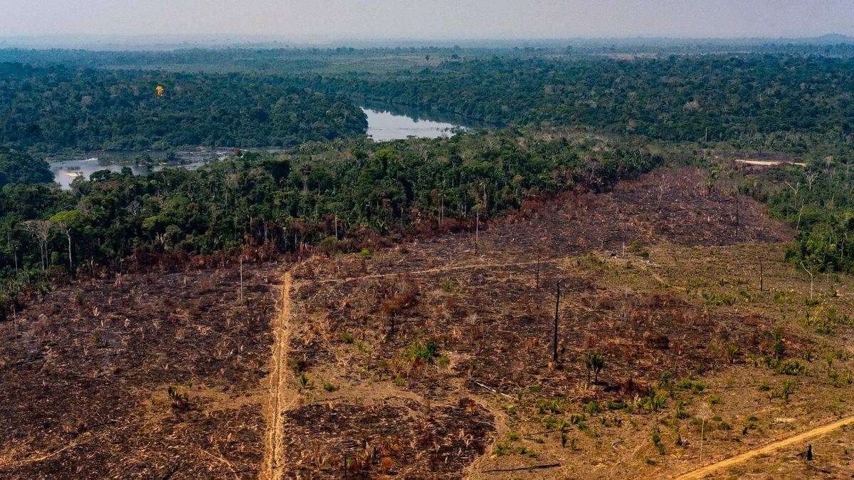 Nejpustošivější květen vhistorii. Odlesňování vbrazilské Amazonii vrcholí