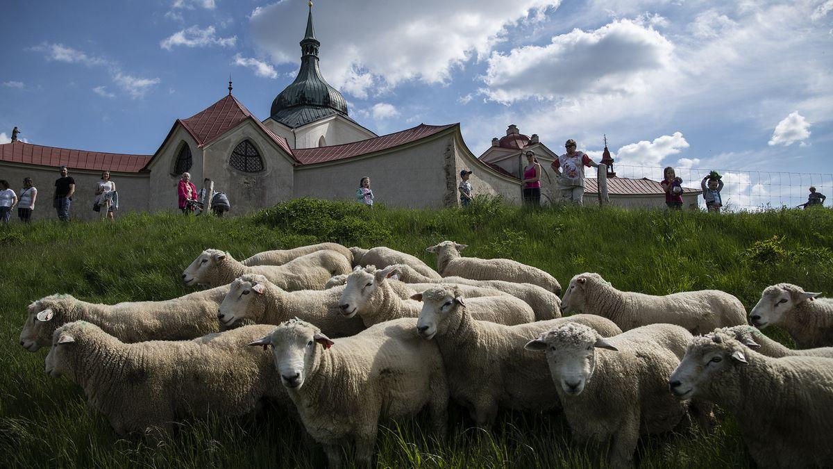 Obrazem: Ovce uzdravují krajinu vokolí chráněné památky