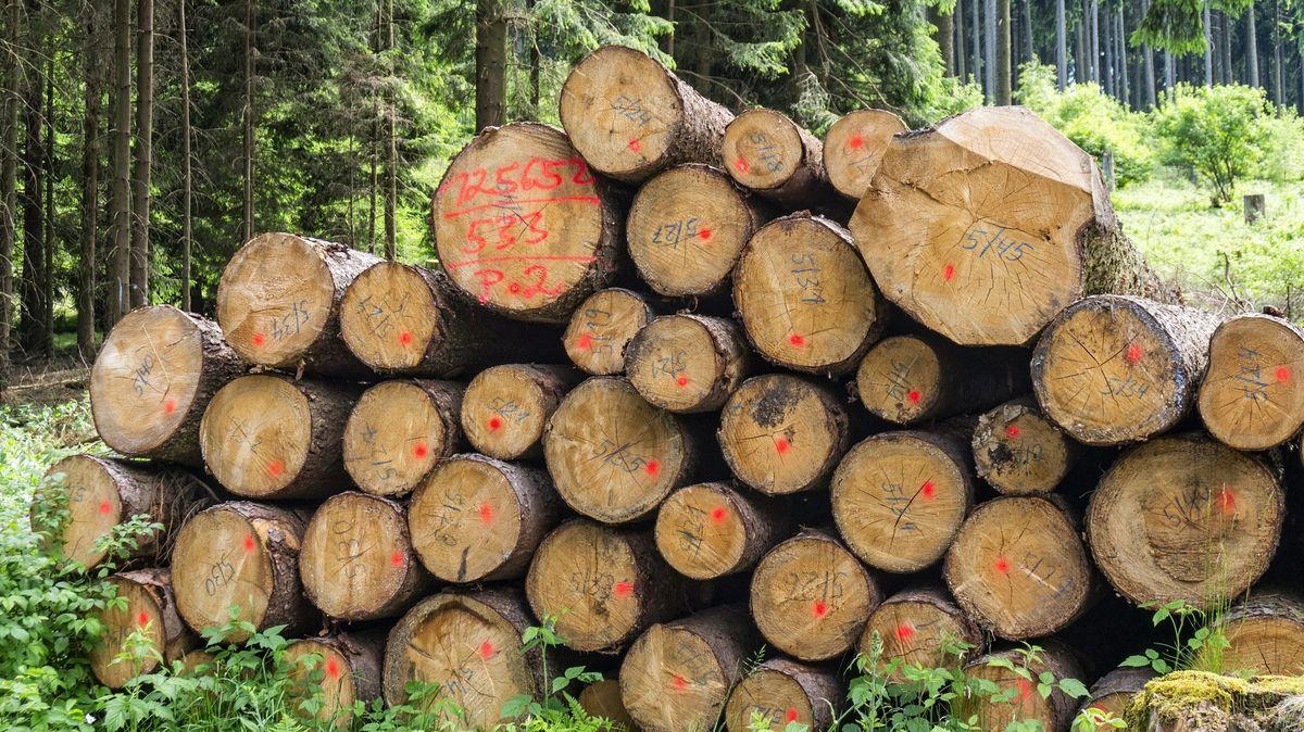Kácení lesů nabralo vEvropě obrátky. Ato mnohonásobně, nejvíce na severu