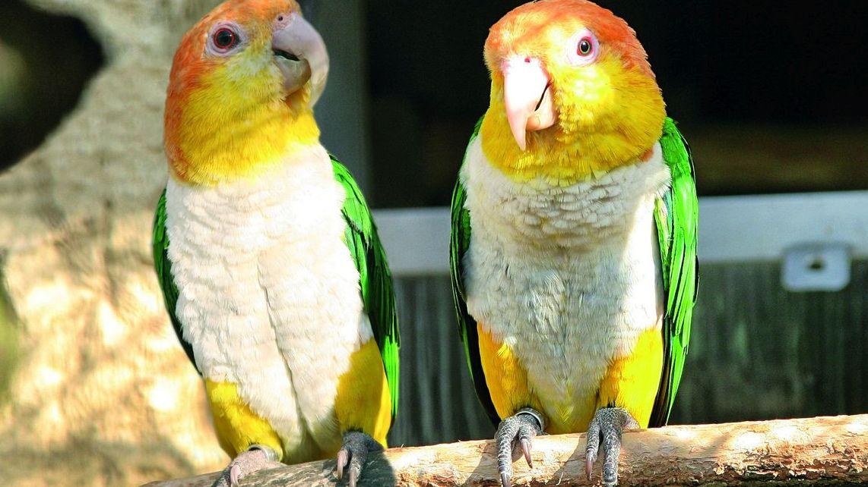 Vpapouščí zoo vBošovicích se těší už zdesítek letošních mláďat