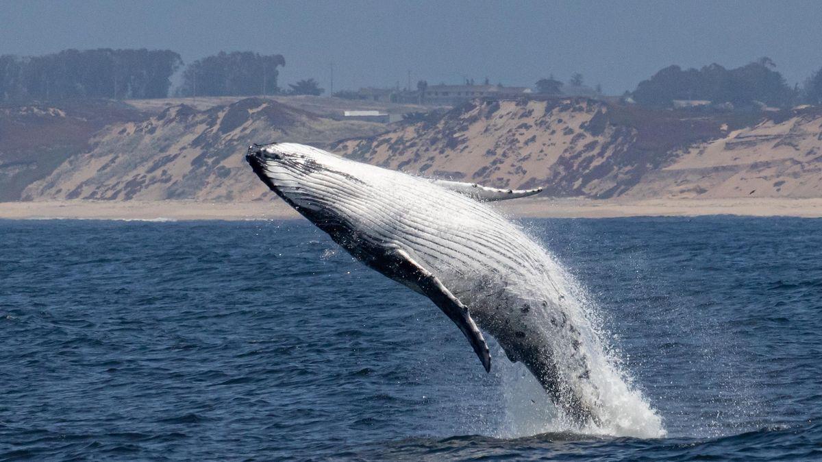 Amerického potápěče spolkl keporkak, za 30sekund ho vyplivl