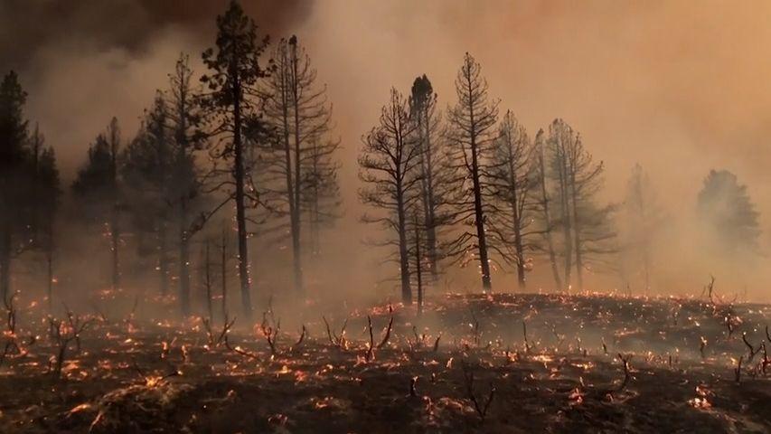 Západ USA a Kanady pustoší požáry a vedra. VÚdolí smrti naměřili 54,5°C
