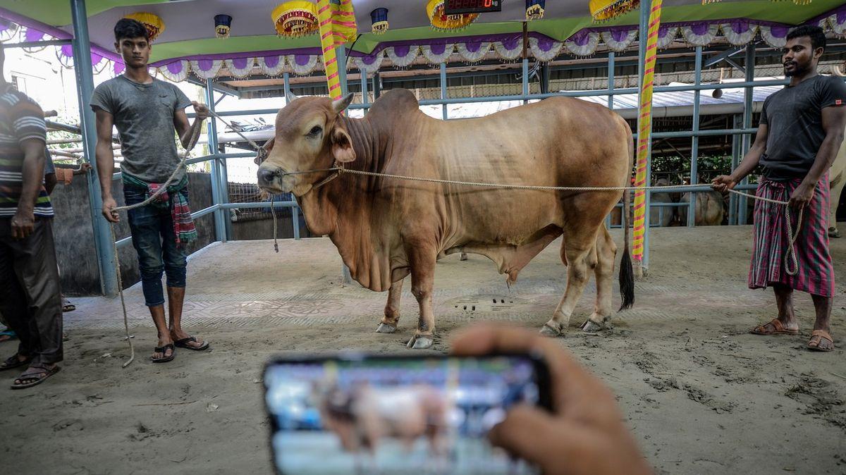 Tradiční prodejci a chovatelé dobytka přešli od smlouvání kprodeji na internetu