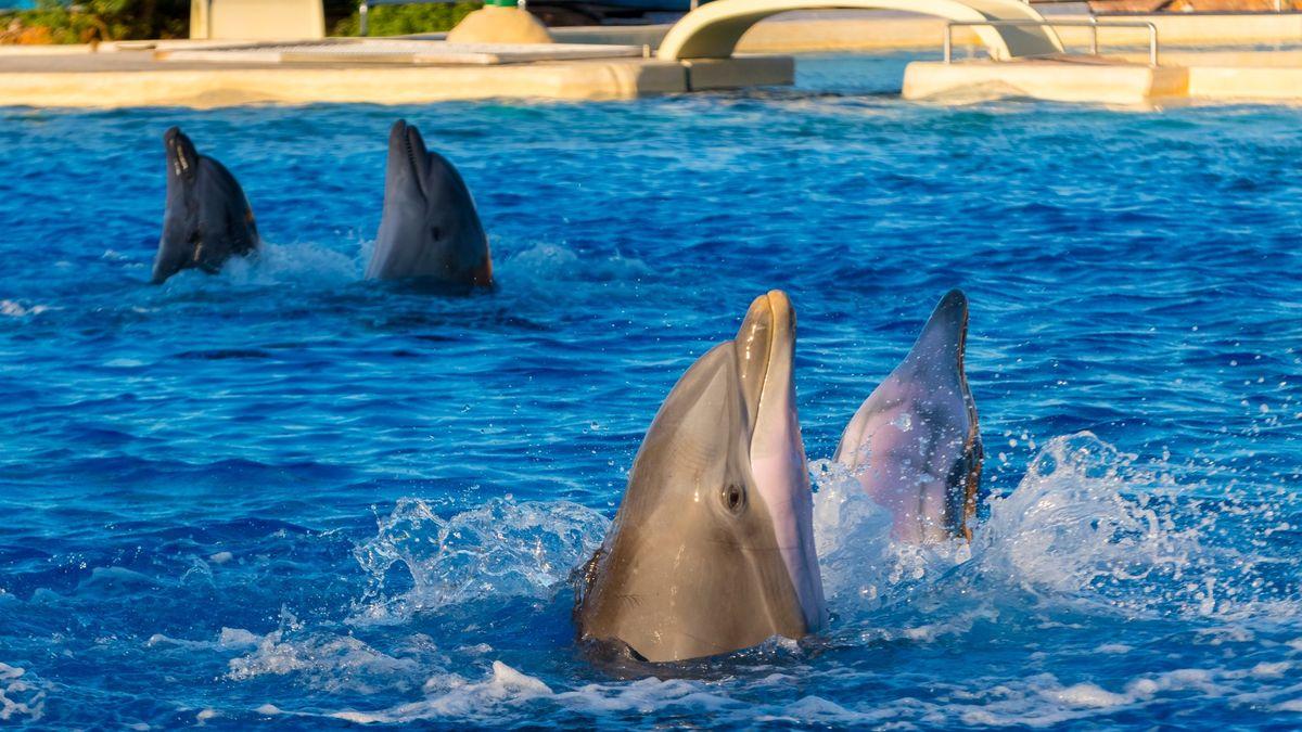 Zvířata a rysy osobnosti. Studie odhalila podobnost mezi delfíny a lidmi