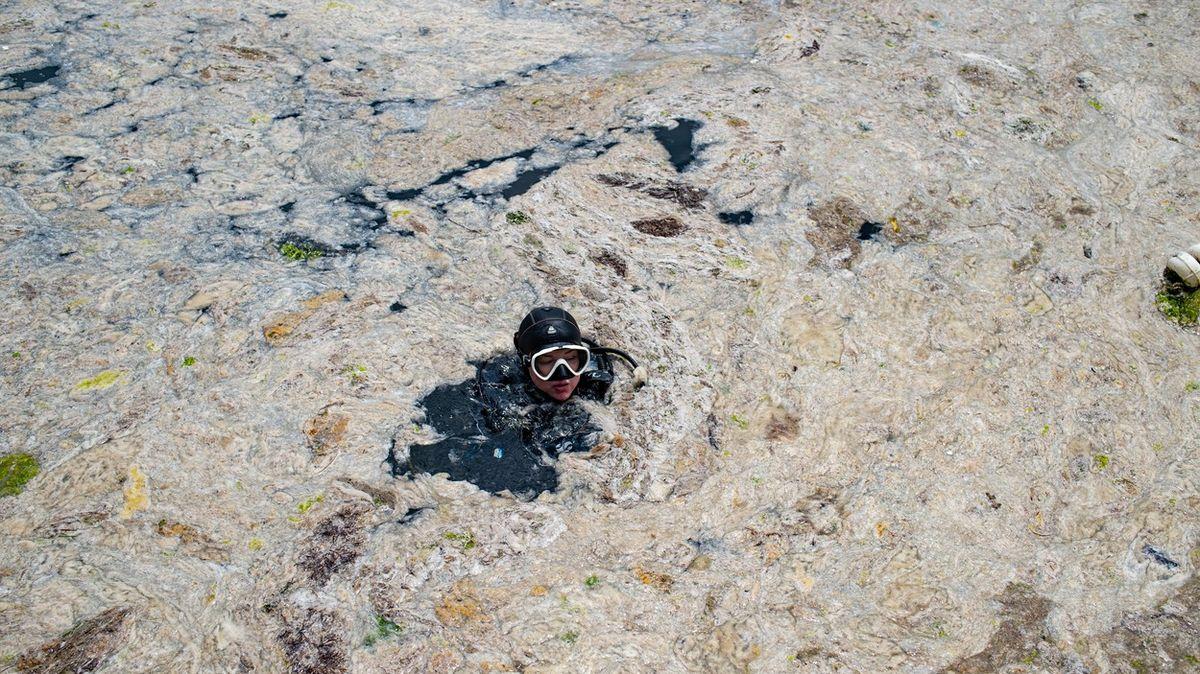 Fotky: Velká slizová kalamita. Voblíbeném cíli turistů spustili úklid mořského hlenu