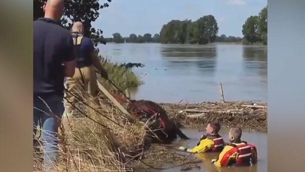 Video ze záchrany hasiče ikrávy: Tak pomohli těm, které spláchla povodeň