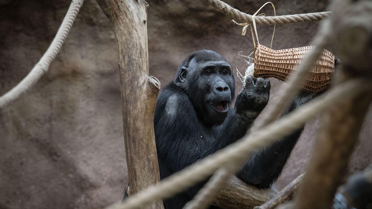 Lidé koupili stravenky pro zvířata vpražské zoo za šest milionů