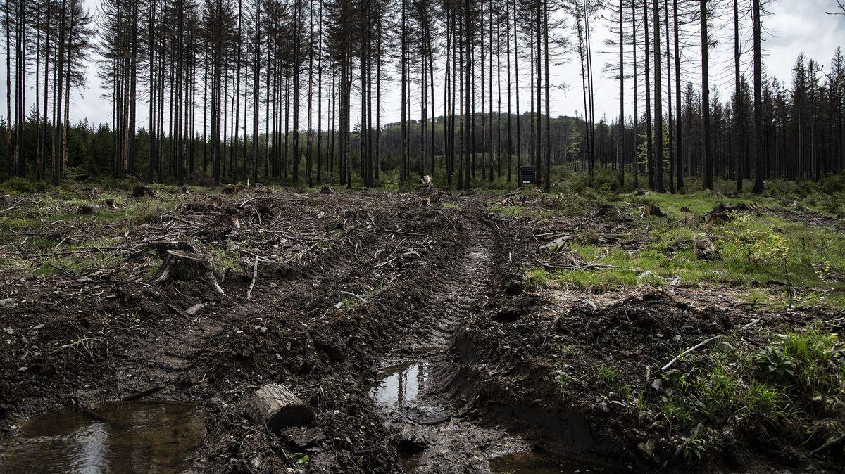 Lesy ČR obnovily epidemií přerušené pracovní Dny za obnovu lesa