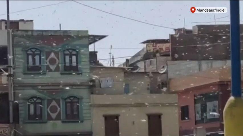 Video: Hejna sarančat a vlna veder decimují indická města